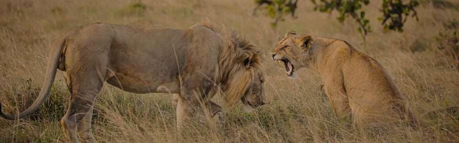 6-Day Tarangire, Serengeti, Crater, Manyara Safari Tour